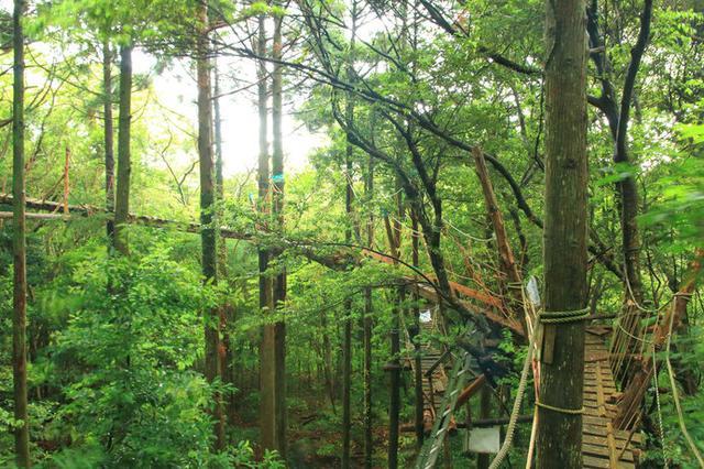 画像: 照葉樹林の中、全長300メートルのボードウォークを歩く「キャノピーウォーク」