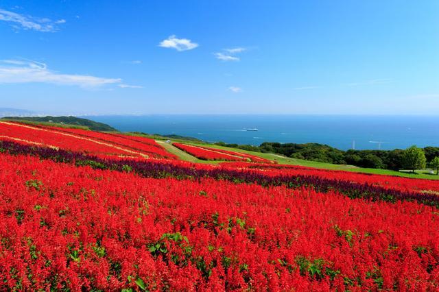 画像: 行楽シーズンのスタートには「秋の花観賞」がオススメ!