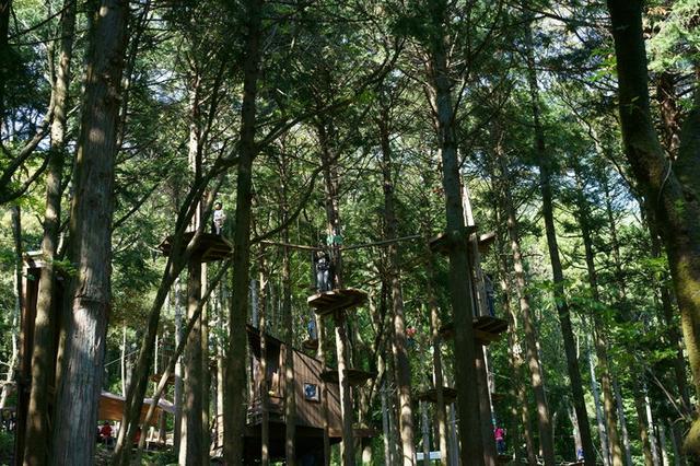 画像: 樹の上を移動する浮遊感とスリルに、誰もが虜に……