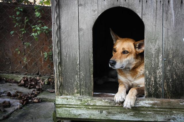 画像: 犬小屋に日陰をつくってあげましょう!