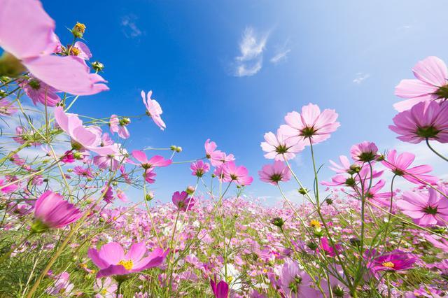 画像: 秋空の下、イキイキと咲き誇る秋の花を観に行きましょう!