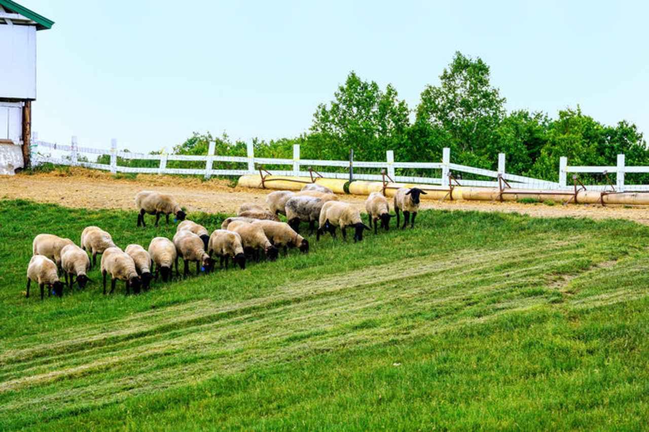 画像: これぞ、THE 牧場!といった雰囲気(画像はイメージ)
