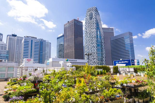 画像: 屋上庭園から見る新宿副都心のビル群