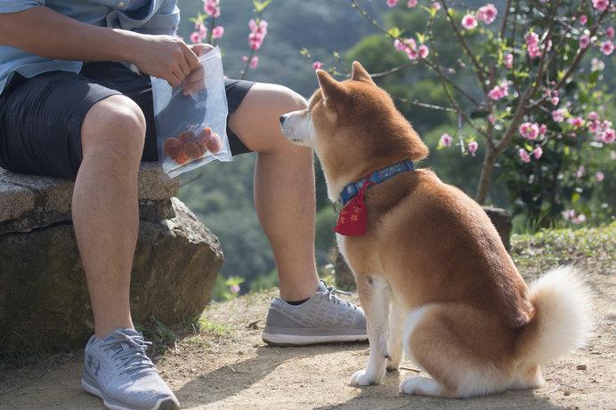 画像: かわいい愛犬にはついつい、おやつを与え過ぎてしまうことも……