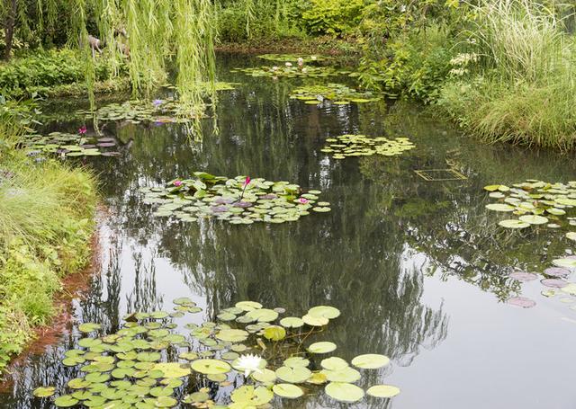 画像: 水辺のやすらぎ、睡蓮の庭が池袋に⁉