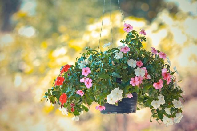 画像: ハンギングポットでガーデニングの楽しみUP! ペットボトルを使えば簡単にお庭がおしゃれに