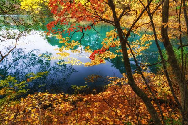 画像: 五色沼(福島)/青沼、赤沼、るり沼…。裏磐梯の神秘の湖沼群
