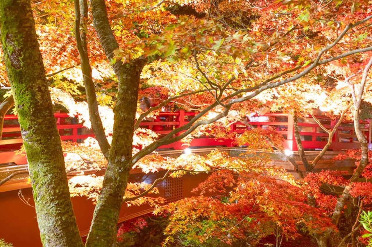 画像: 弥彦公園もみじ谷(新潟県)