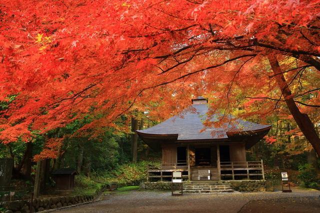 画像: 中尊寺(岩手)/金色堂と赤色のコントラスト!!世界遺産を彩る紅葉