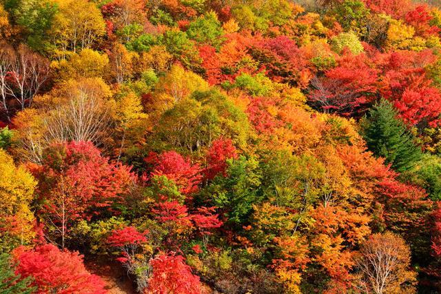 画像: 10月から見ごろ!!一足早い紅葉を楽しむなら北へ。「東北の紅葉」絶景4選