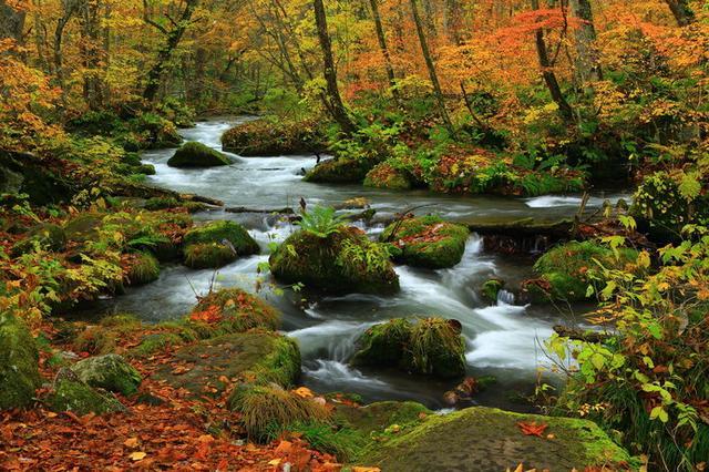 画像: 奥入瀬渓流(青森)/全長14kmの渓流を散策。木々と水流の調和が美しい