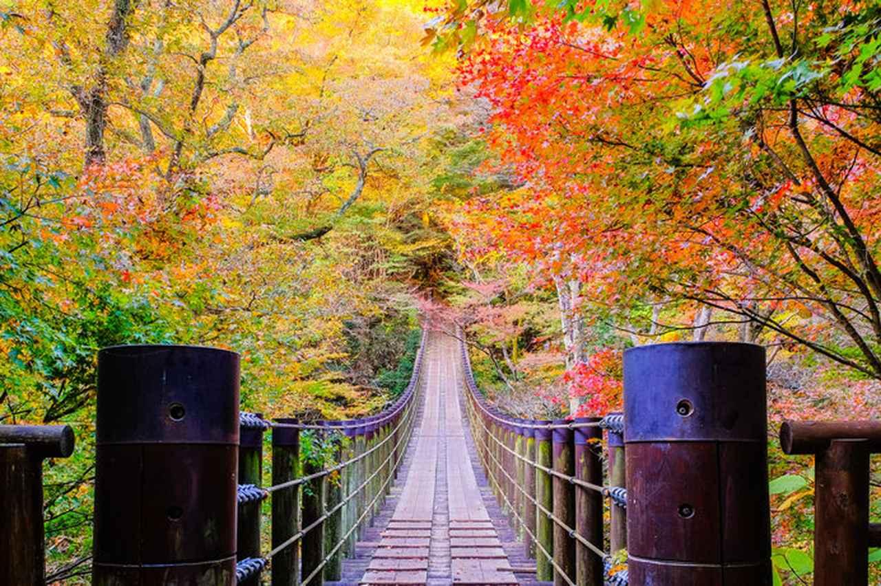 画像: 花貫渓谷 汐見滝吊り橋(茨城県)