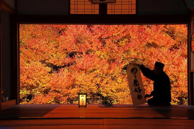 画像: 燃えるような緋色のドウダンツツジは、まるで額縁に入った絵画のよう!