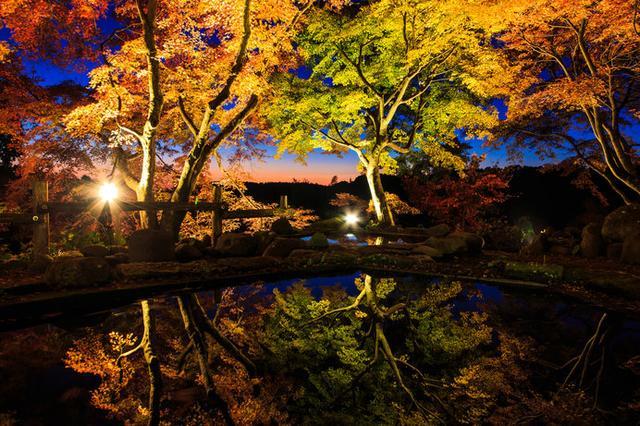画像: その年の色づきに応じて期間限定で公開される「三十路苑」は、夜間のライトアップも必見!
