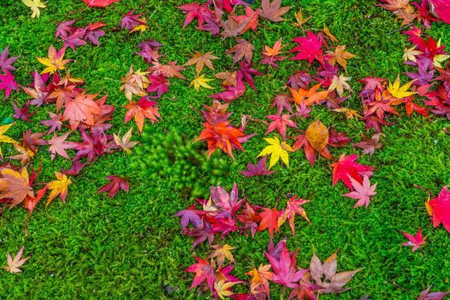 画像: 芝や常緑樹と紅葉のコントラストも美しいですよね!