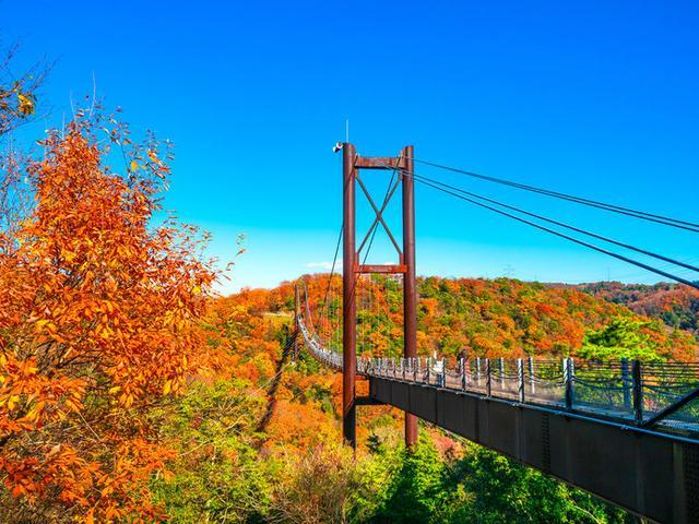 画像: 人が歩いて渡る木製床板の吊り橋としては国内最大級の「星のブランコ」