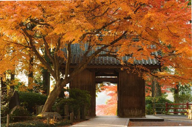 画像: 大興善寺の山門「仁王門」は、前後に豊かな紅葉が広がり、フォトスポットとしても人気