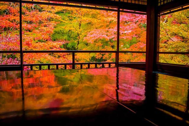 画像: 黒塗り机の天板に「瑠璃の庭」の絢爛たる紅葉が映るリフレクション風景が人気