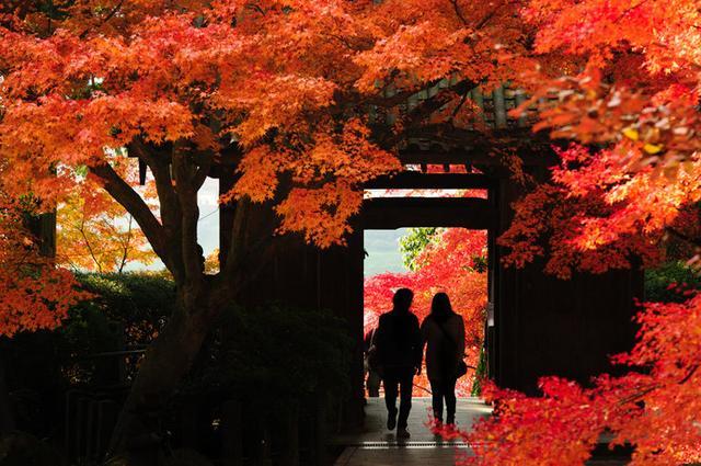 画像: 春はツツジ、秋は紅葉の名所として知られる佐賀の「大興善寺」