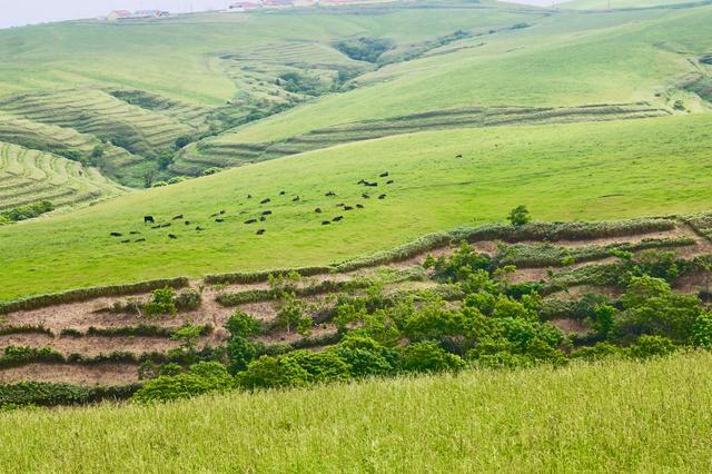 画像: 宗谷丘陵と牧草地の様子