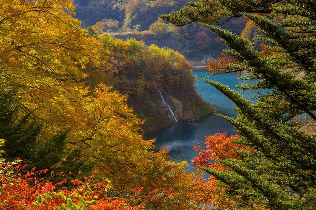 画像: 湖畔の高台から望むと、鮮やかな紅葉と四万ブルーのコントラストが見事