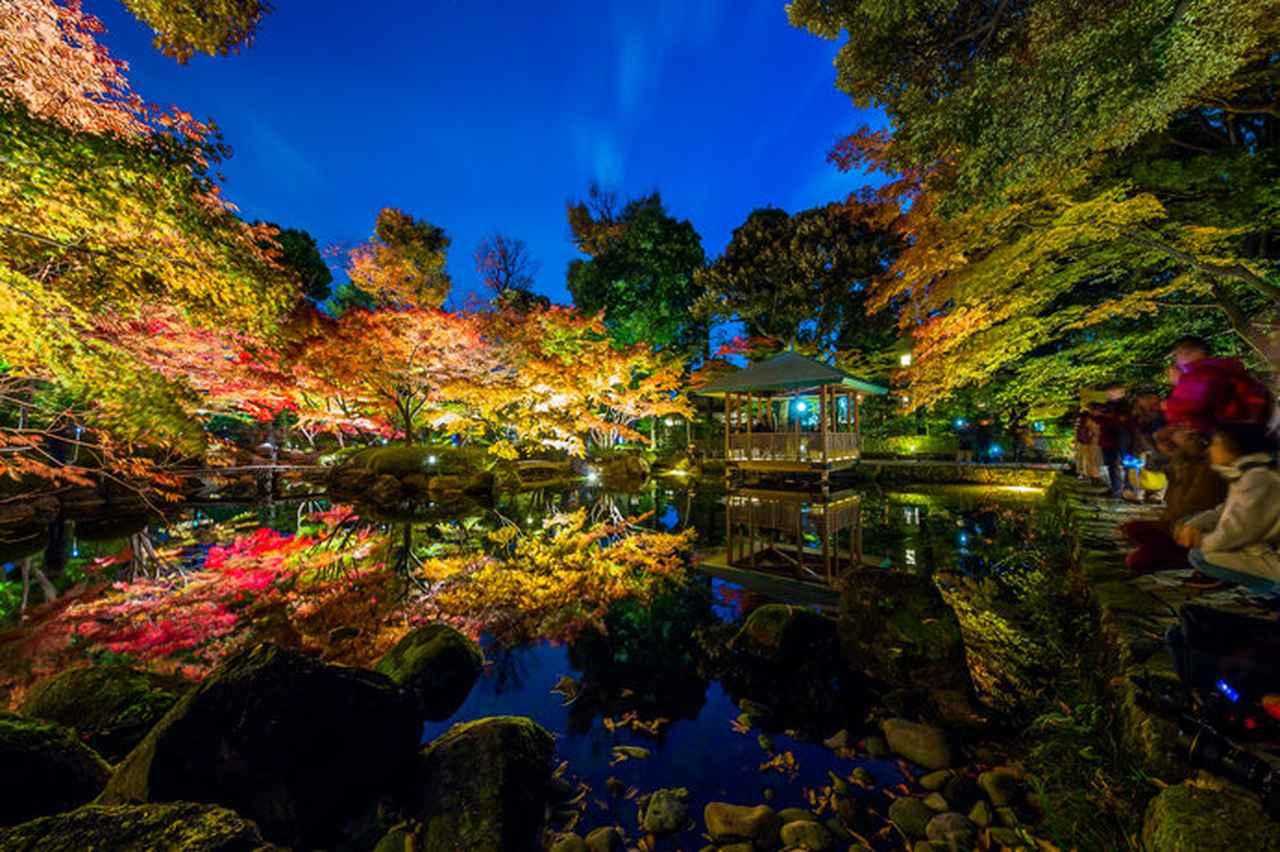 画像: 夜の大田黒公園(杉並区)