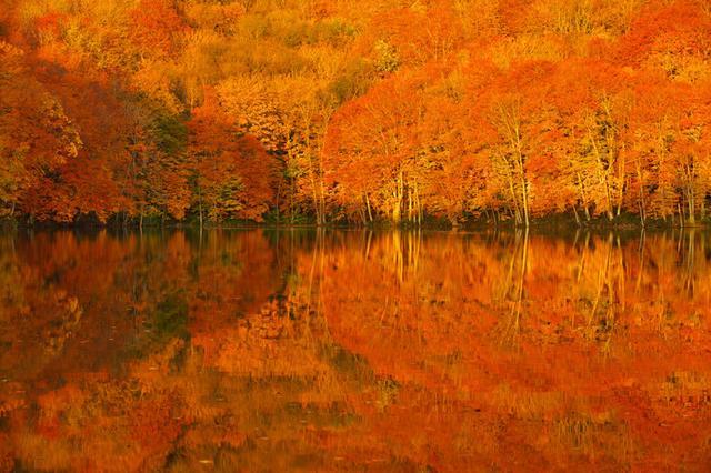 画像: 日が昇りゆく一瞬、静寂の湖面が紅葉に染まる様をおさえた「奇跡の一枚」
