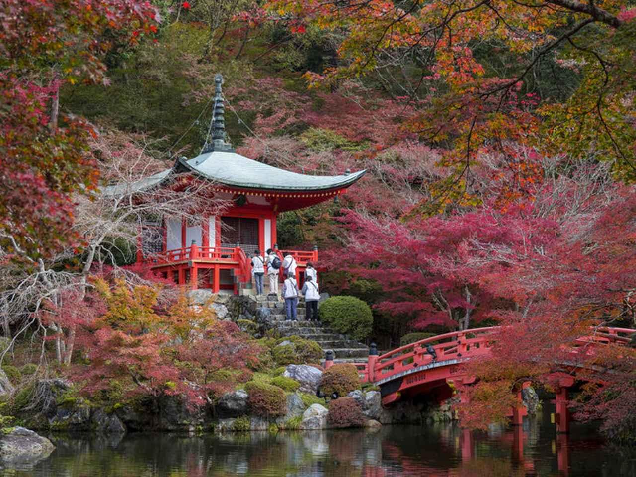 画像: 一幅の絵画のように美しい、秋の「醍醐寺」