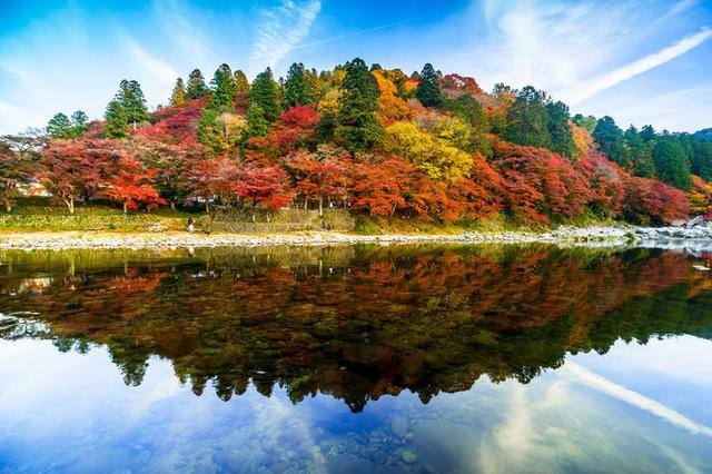 画像: いよいよ紅葉の時季が到来! ※画像は香嵐渓の紅葉