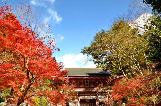 画像: 秋の「鞍馬寺」