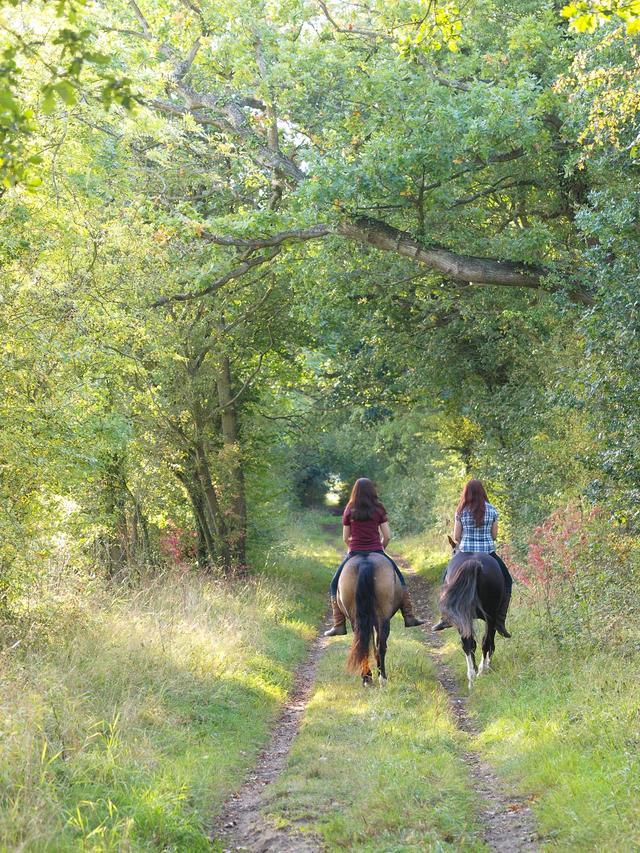 画像: まずは乗馬を1度体験してみよう! 乗馬クラブよって、体験も様々なので自分に合った場所を見つけよう