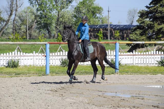 画像: ブリティッシュスタイルの乗馬イメージ画像