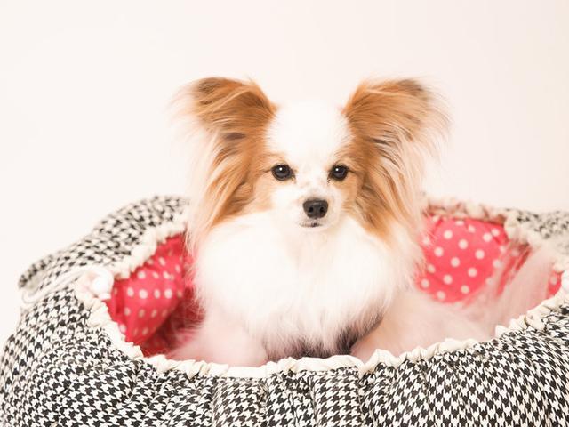画像: ※お住まいの地域にや犬種、年齢や健康状態によって調節してください