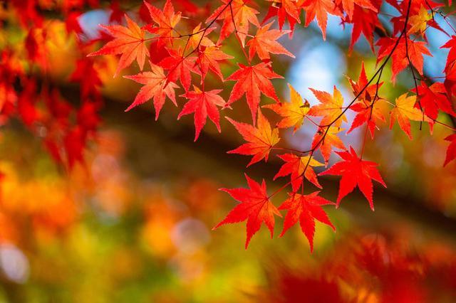 画像: 日本の秋を感じる美しい紅葉スポットをご紹介します!