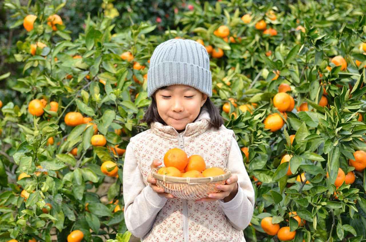 画像: 今が旬。実りの秋は島根・山口・徳島で果物狩りを!