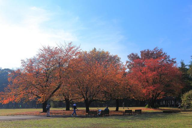 画像: 紅葉時期の砧公園