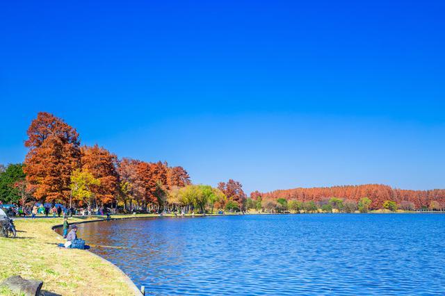 画像: 秋の水元公園