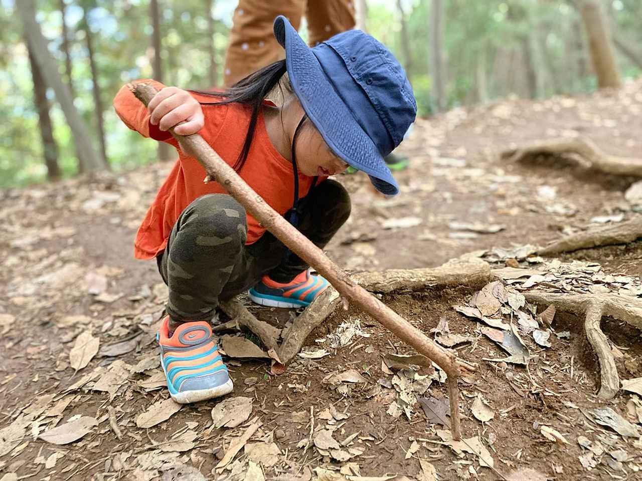 画像: 筆者撮影 3歳の娘が自然に触れている様子(11月上旬の高尾山)