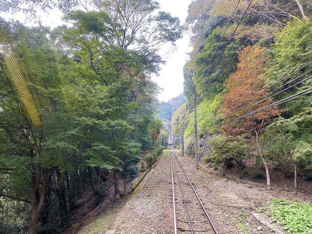 画像: 筆者撮影 高尾山ケーブルカーからの景色