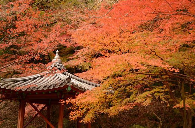 画像: 真っ赤に染まった「紅葉谷公園」