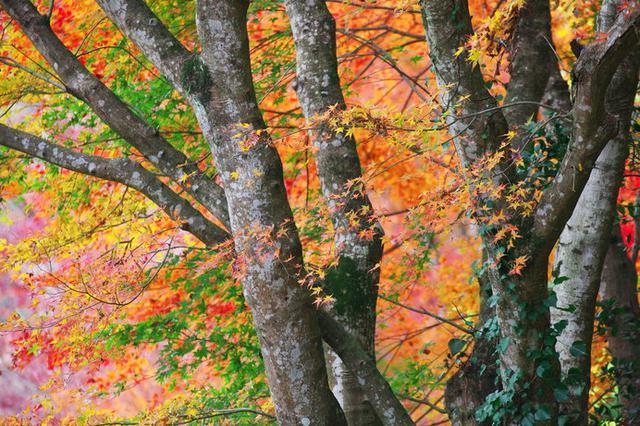 画像: 養老渓谷の紅葉(千葉県)