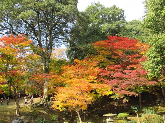 画像: 紅葉した木々が映える「尾関山公園」