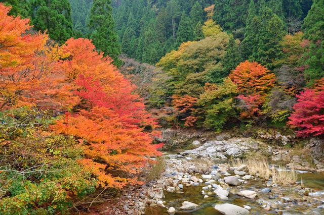 画像: 紅葉した自然豊かな「奥津渓」