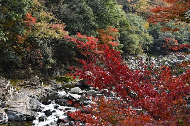 画像: 「長門峡(ちょうもんきょう)」を染め上げる紅葉