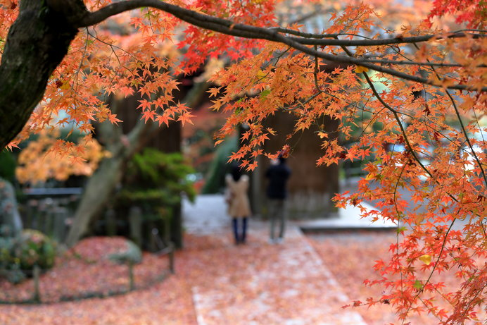 画像: 大興善寺の紅葉(佐賀県)