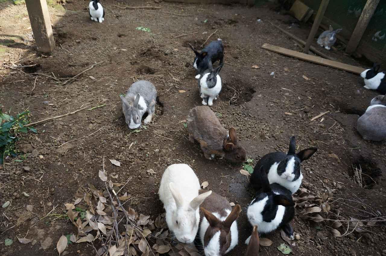画像: 筆者撮影「食欲旺盛なウサギたち」