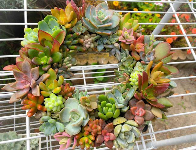 画像: 【簡単DIY】多肉リースで庭をおしゃれに! 100均ザル&ネルソルを使った作り方 - ハピキャン(HAPPY CAMPER)