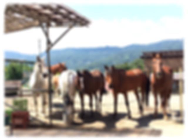 画像: ブルームーンヒルへようこそ!|群馬・みなかみ町の乗馬クラブ