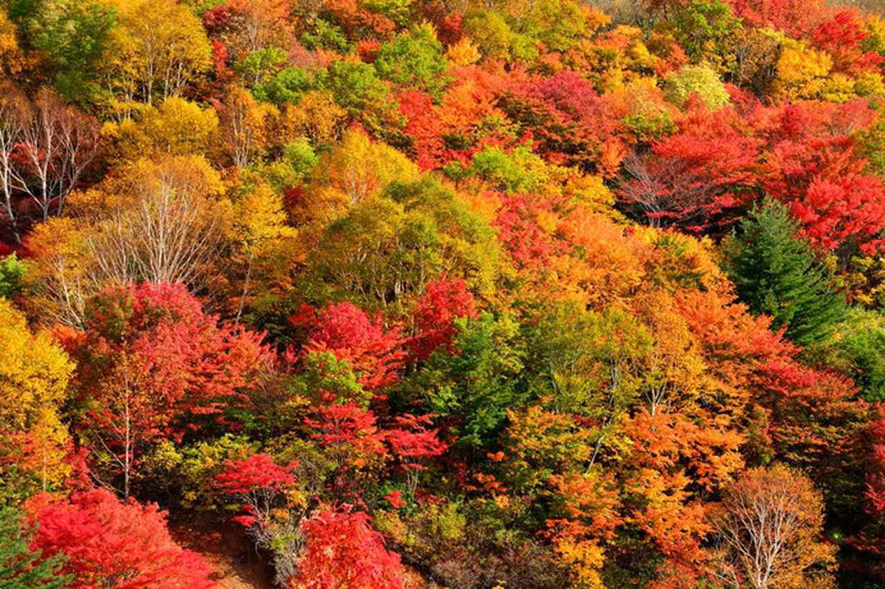 画像: 10月から見ごろ!!一足早い紅葉を楽しむなら北へ。「東北の紅葉」絶景4選 - ハピキャン(HAPPY CAMPER)