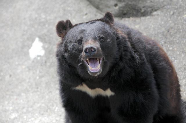 画像: 冬だからといって油断は禁物! 雪中キャンプは野生動物との遭遇に注意を! 冬眠できなかった熊も